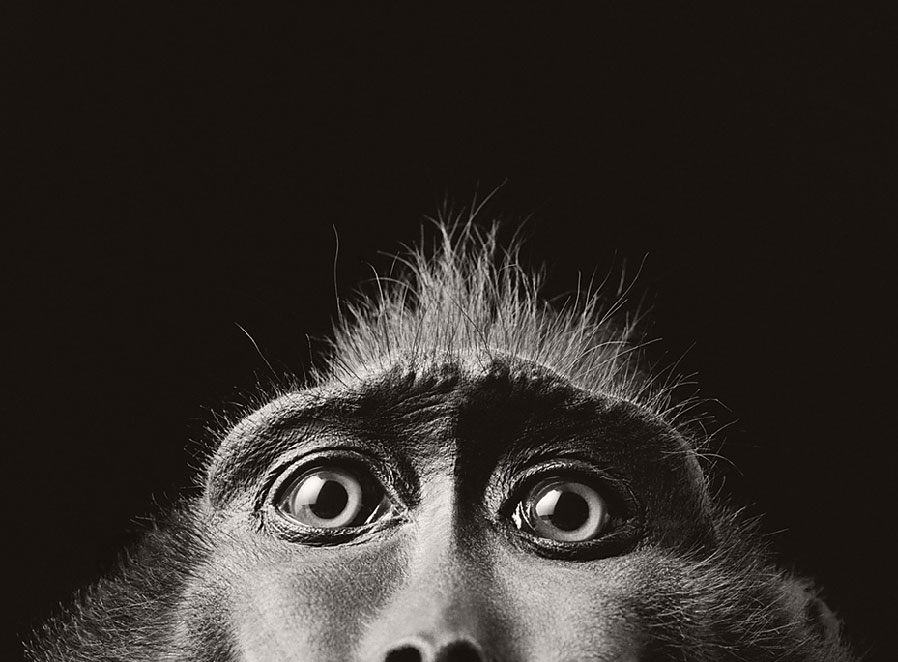 Animals? Singe_tim_flach