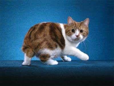 les 10 plus beaux chats du monde   h2 blog