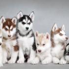 les-5-plus-beaux-chiens-du-monde