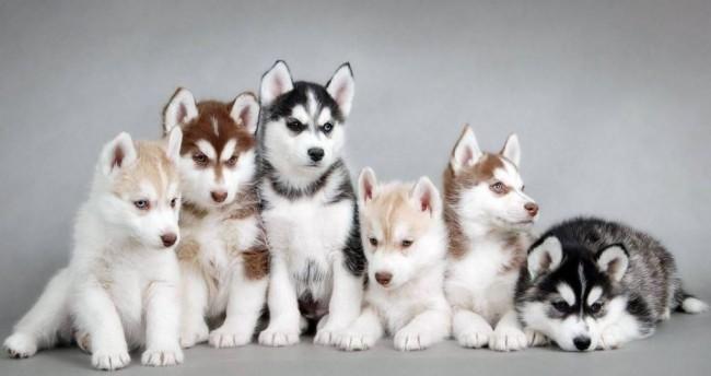 Les 5 plus beaux chiens du monde
