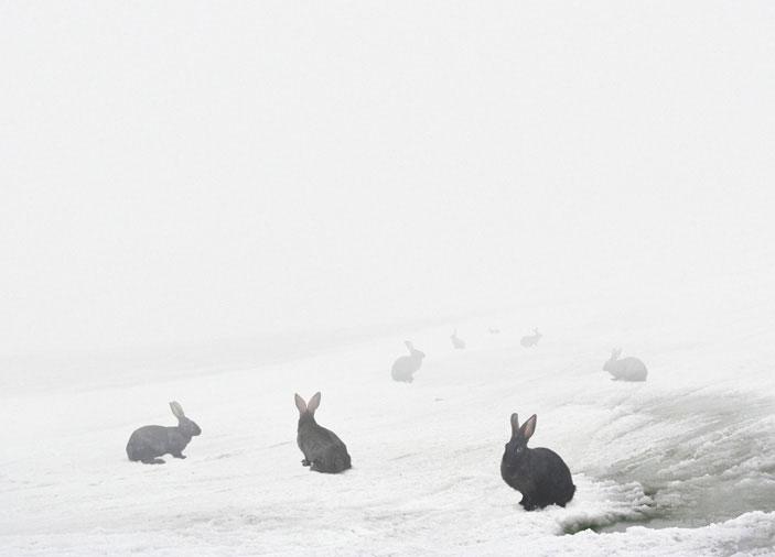 lapins neige Andrea Galvani